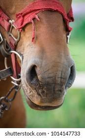 Bound horse image