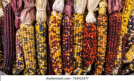 Bountiful Indian Corns