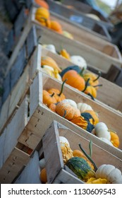 Bounty of fall Crates full of gourds