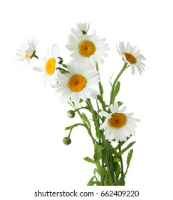Bouquet of beautiful chamomile flowers on white background