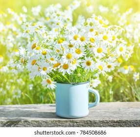 Bouquet of beautiful daisies in summer garden