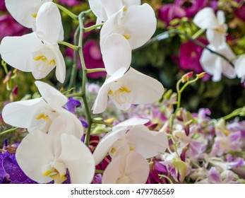 Bouquet of beautiful orchid flower with blurred background
