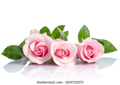 bouquet  of beautiful pink roses lying on white background