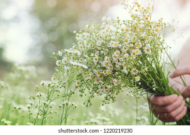 Bouquet of beautiful summer wildflowers in human hand. Picking flowers outdoors