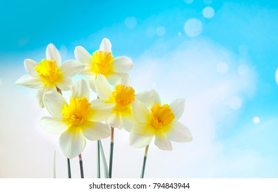 Bouquet of beautiful white with yellow daffodils close-up against a blue sky with clouds, with copy space. Light gentle easy airy artistic image of nature in the spring.