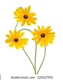 Bouquet of Blackeyed Susan flowers