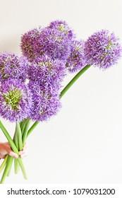 bouquet of blooming allium