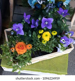 the bouquet of blue campanula and ranunculus for sale