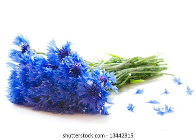bouquet of blue cornflowers and some petals on white