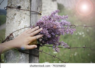 A The bouquet of blue flowers in the hand of a child near a fence with barbed wire . The memory of dead children in a concentration camp. The Holocaust memorial
