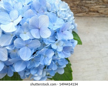 Bouquet of blue hortensias on the rustic wooden table.