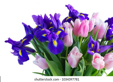 Bouquet of blue irises and pik tulips flowers close up isolated on white background