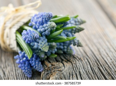 Bouquet of blue muscari on rustic wooden background