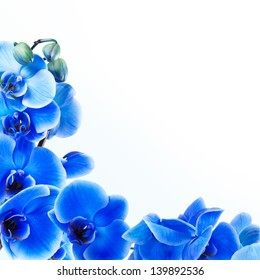 bouquet of blue orchid isolated on white background