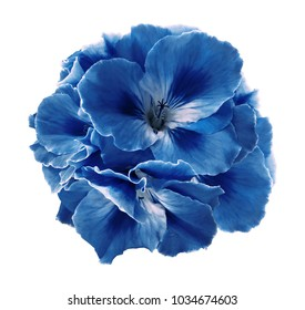 A bouquet of blue-white begonias on a white isolated background with clipping path.  Close-up without shadows. Nature.