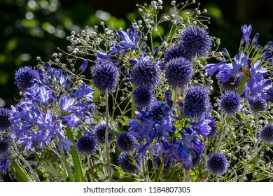 A bouquet of bright blue agapanthus and echinops flowers with white gypsophilia