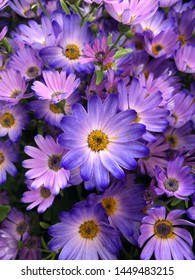 A bouquet of bright chrysanthemums with pink and blue petals close-up