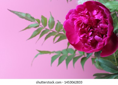 A bouquet of bright garden flowers of a dahlia on a juicy pink background, natural colors, high contrast, a card for a holiday or wedding.