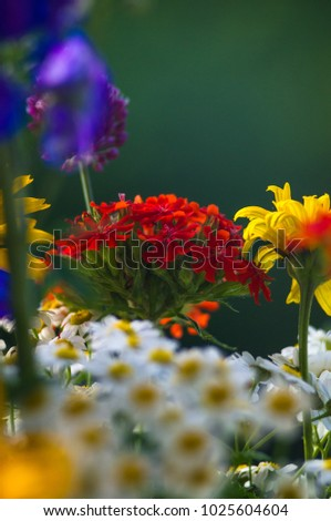 Bouquet Bright Spring Flowers Various Types Stock Photo Edit Now