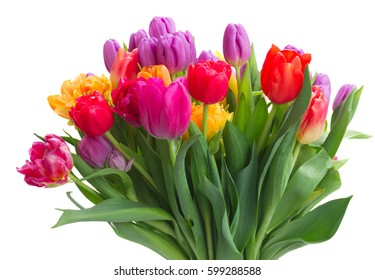 bouquet of bright spring tulips isolated on white background