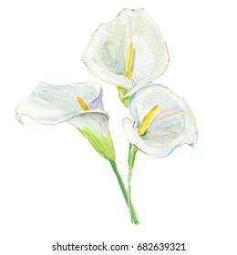 Bouquet Calla Lily. For wedding invitations and holiday cards. Watercolor.