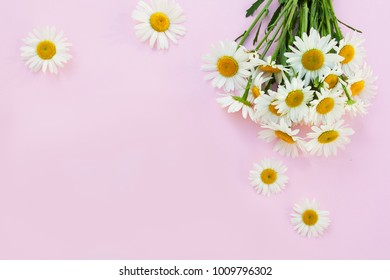 bouquet of camomile on a pink background