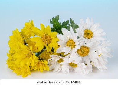 Bouquet of chamomiles, isolated on white background
