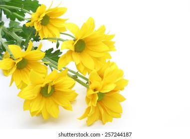 Bouquet of chrysanthemum