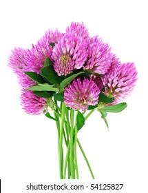 bouquet of clover flowers trefoil