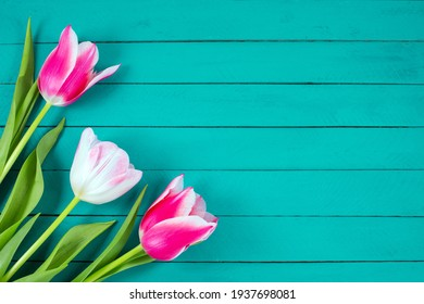 Bouquet of Color tulips on blue wooden background. Flat lay, top view, copy space. Easter or Mother's Day greeting card