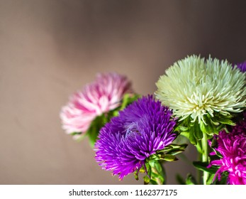Bouquet of colored asters. Autumn flowers. Blurred background. Aster.