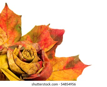 bouquet of colorful autumn leaves isolated  for your text
