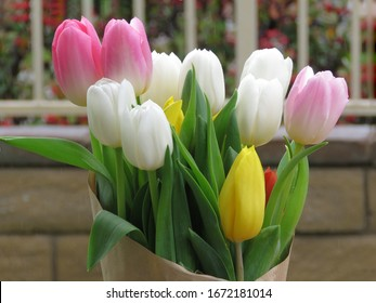 Bouquet of Colorful and Beautiful Tulips