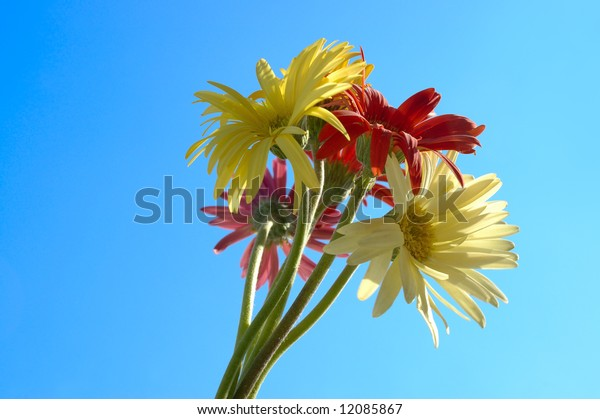Bouquet of colorful daisies against blue sky background