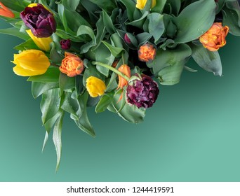 Bouquet of colorful fresh spring flowers with water drops after rain close-up, top view. Bright holland tulips on a calm green background with space for  text below right on holiday postcard.