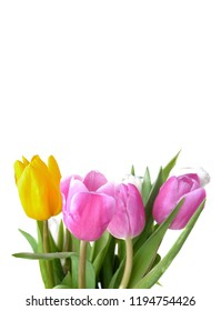 bouquet of colorful and pretty tulips on white background
