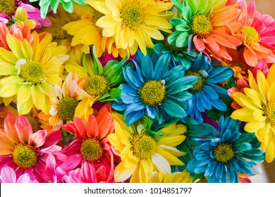 bouquet of colorful Rainbow daisies background