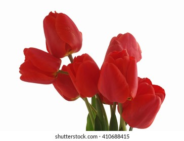 bouquet of colorful spring flowers of tulips on a pure white background.