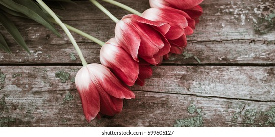 Bouquet of colorful tulips close up on an old painted wooden background
