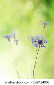 Bouquet of cornflower flowers  with bokeh and copy space,  floral abstract background