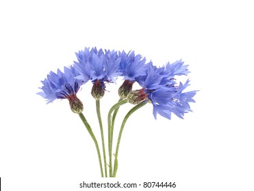 bouquet of cornflowers isolated on white background