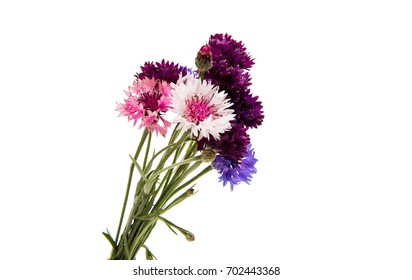 A bouquet of cornflowers on a white background