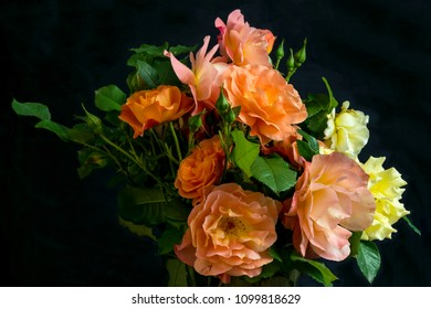 bouquet of cut blossoming warm mild color springtime roses , shot in front of  a black backdrop, in springtime at Milan, Italy