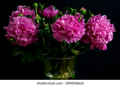 bouquet of cut gorgeous blossoming violet peony flowers, shot in front of  a black backdrop, in springtime at Milan, Italy
