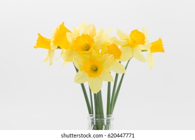 Bouquet of daffodil flower isolated on white background