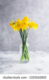 Bouquet of daffodils in a glass vase on a gray background