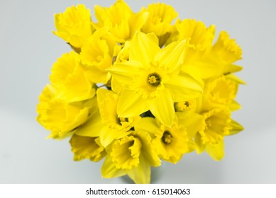 Bouquet of daffodils on a white background.