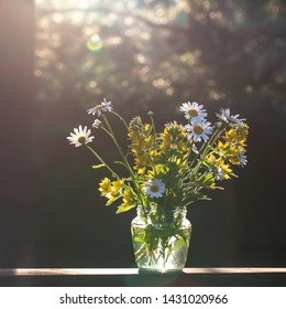 Bouquet of daisies in backlight. Dark background with bokeh. Summer sunny evening. Sunset light Summer mood