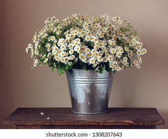 bouquet of daisies in a bucket on the table. garden flowers.