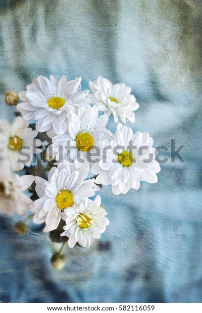 bouquet of daisies (Chrysanthemum white) on  toned background. old paper texture. soft focus, grunge texture